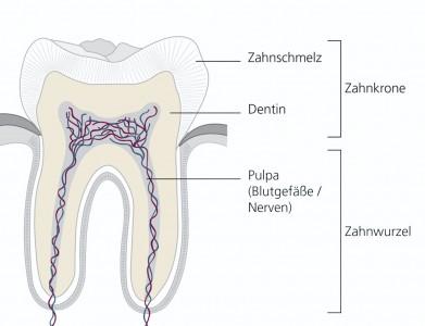 flyer_endodontischebehandlung_abb_1