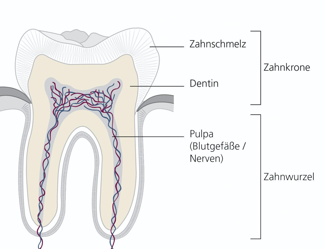 Wurzelkanalbehandlung - Dr. Verch & Dr. KanerDr. Verch & Dr. Kaner